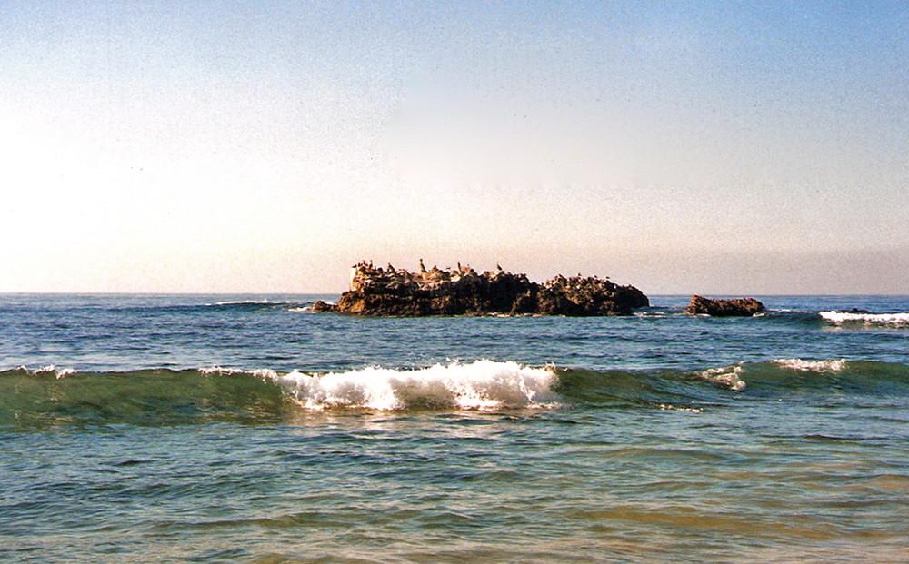 Pelikane im Pazifik auf der Vogelinsel bei Laguna Beach