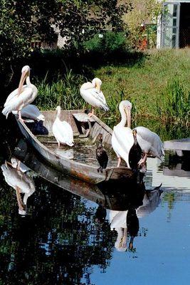 Pelikane u. Kormorane beim Sonnenbaden