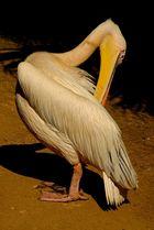 Pelikanputz