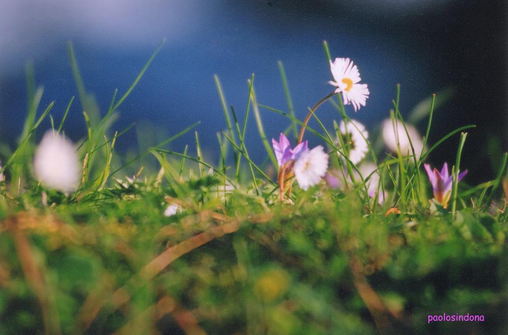 peloritani in fiore