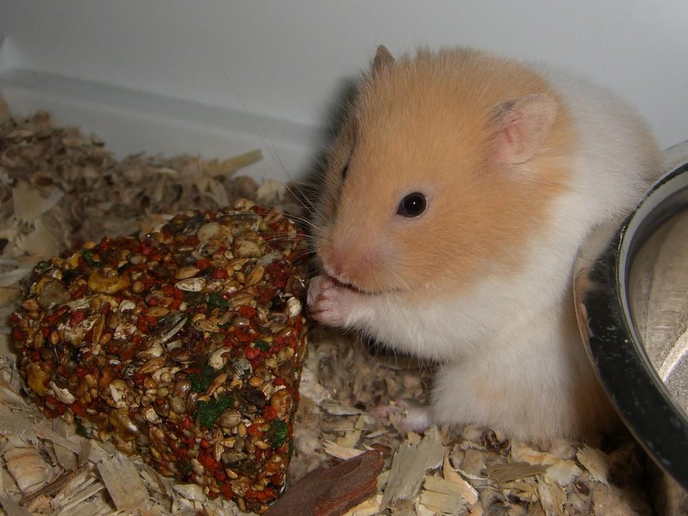peluche der kleine Hamster