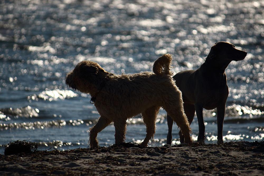 Pelzerhaken - Hundestrand