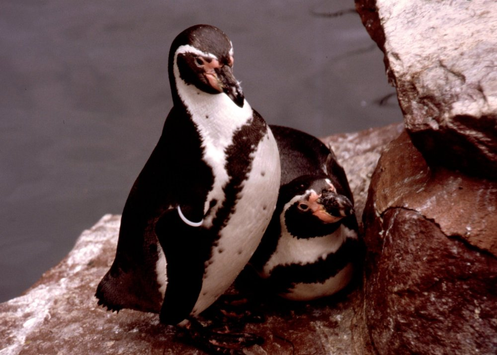 Penguin brothers