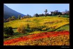 ..pennellate dell'autunno!..