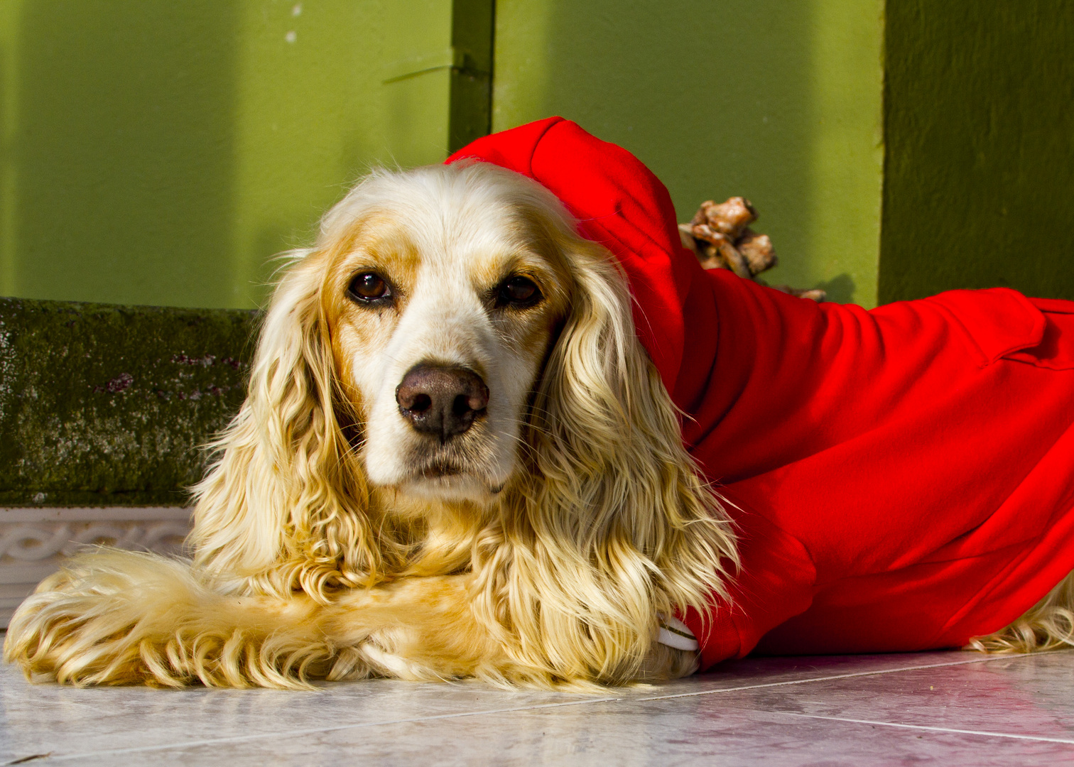 Pepe estrenando abrigo en estos días de frío