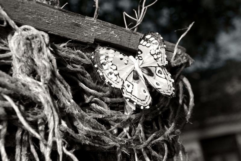 pepela (Mariposa)