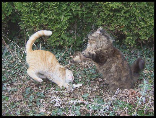 Pepino vs. Nachbarkatze