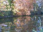pepite d'automne