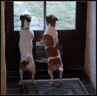 Pepper und Chilly auf vordersten Rängen ;-)