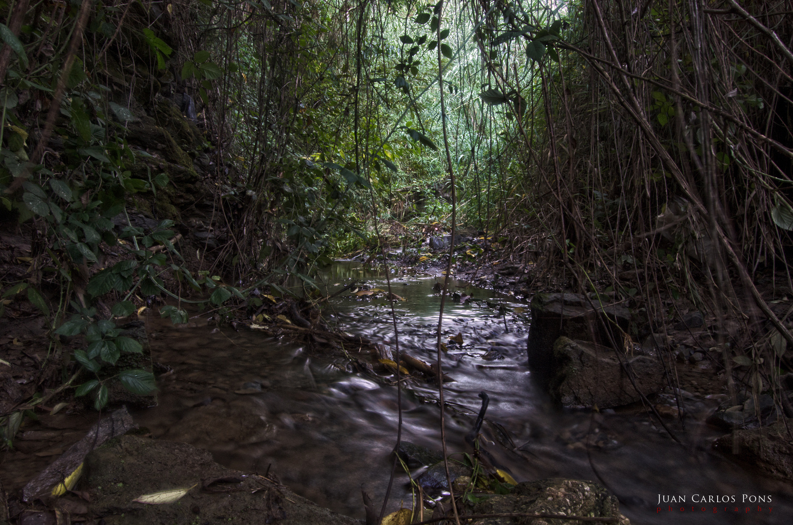 Pequeña jungla.