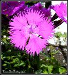 Pequeña y grande Flor.