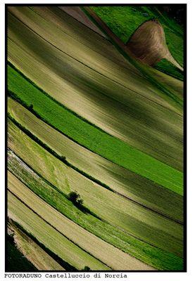 per la serie: la fioritura di Castelluccio di Norcia