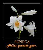 PER SONECA