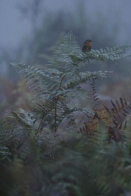 Perchoir d'automne