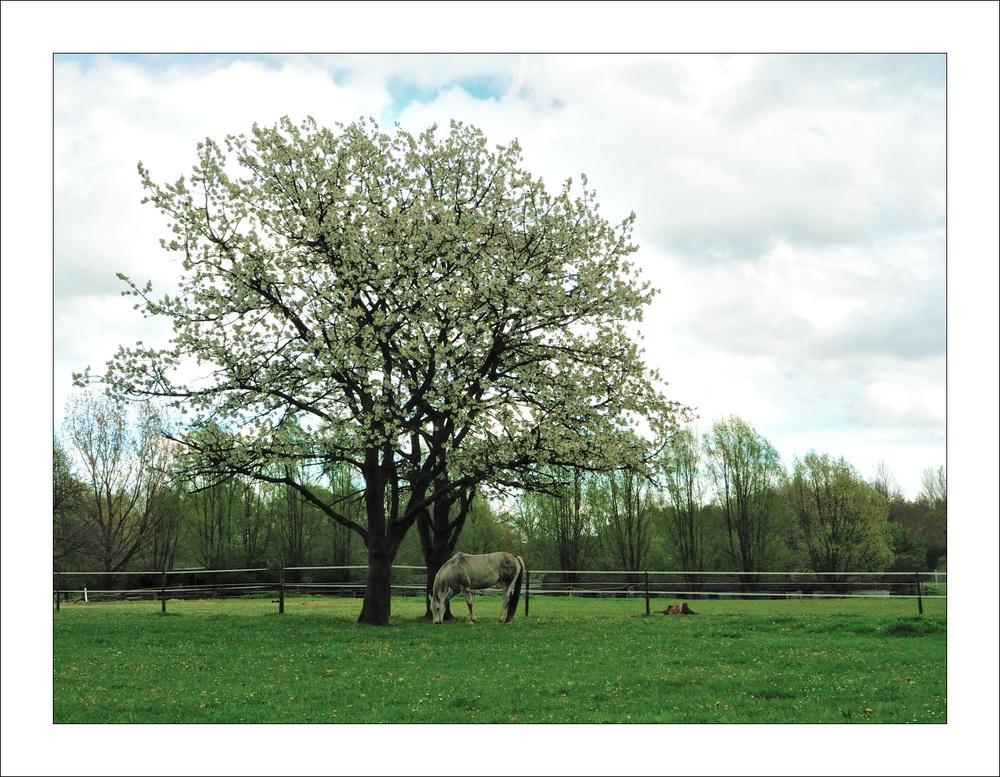 Perd und Baum