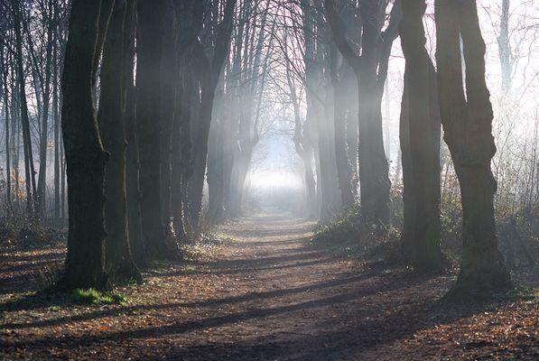 Perdu dans la forêt.