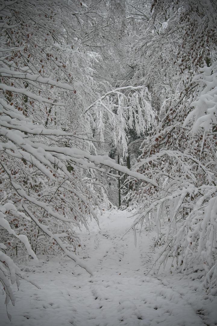 Perdu dans la forêt blanche