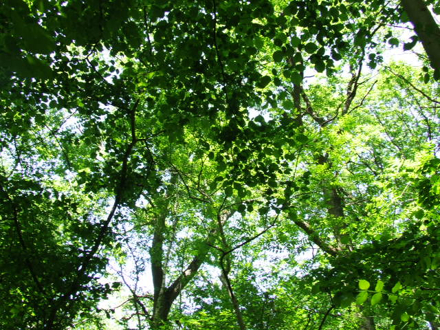 Perdu dans les feuilles