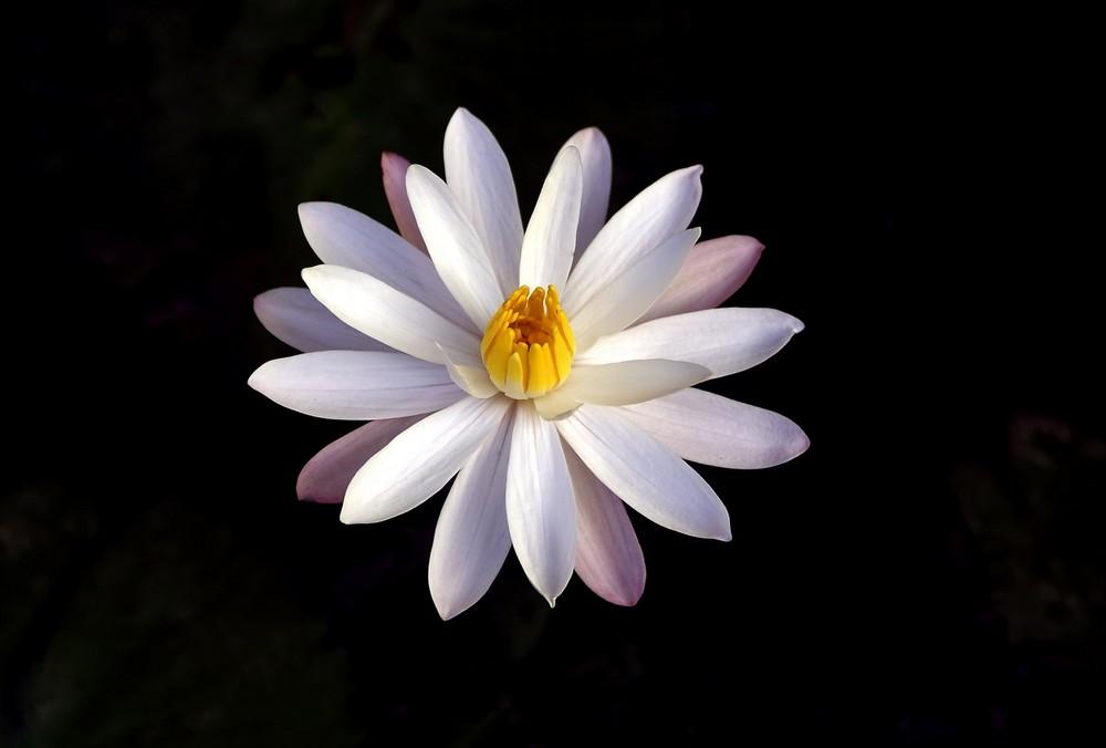 Perfekte Blüte