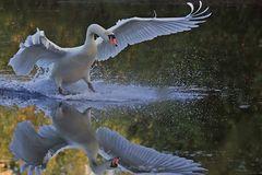 Perfekte Landung