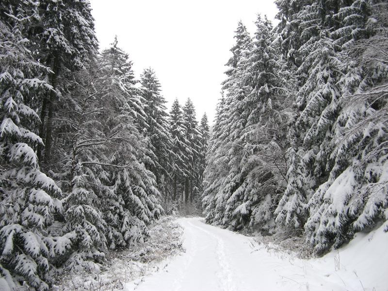 perfekte Weihnachtsbäume