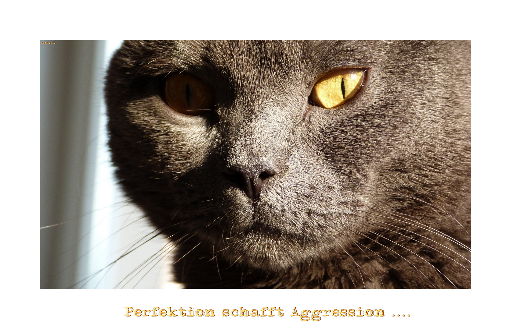 Perfektion schafft Aggression .....