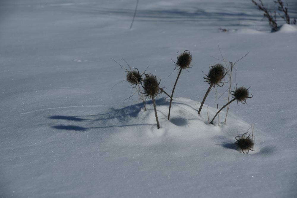 périscopes hivernaux ??