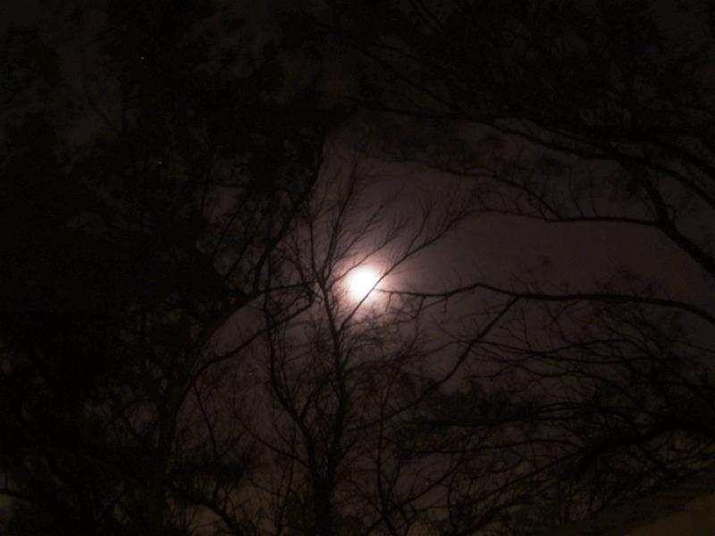 Perla en noche brumosa