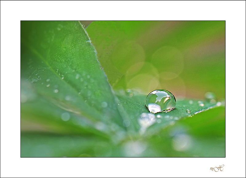 Perle de pluie.