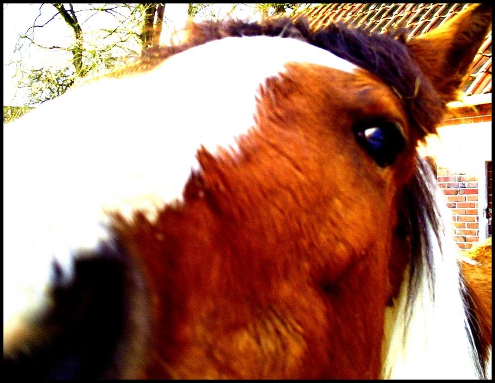 Perle.Mein Pferdchen.Für immer.