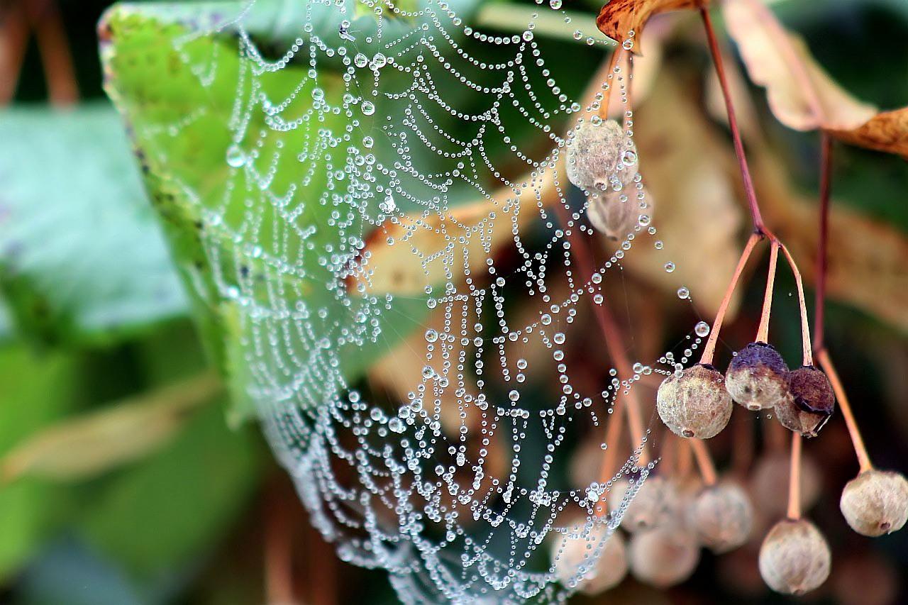 Perlen (5)