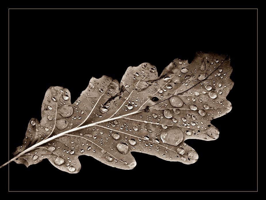 Perlen auf Eichenblatt