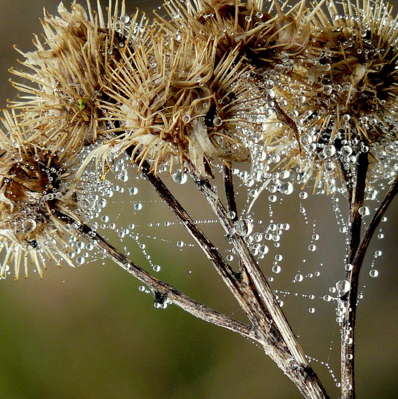 Perlen behangen ......