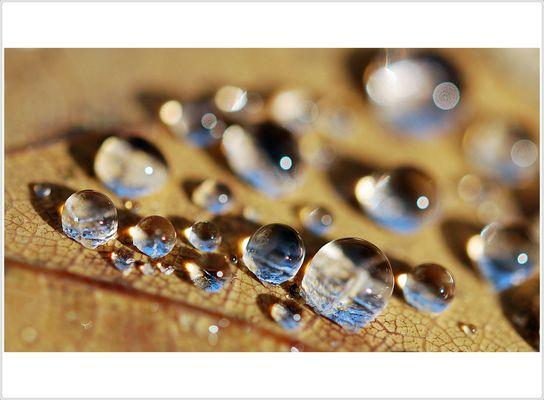 Perlen der Natur