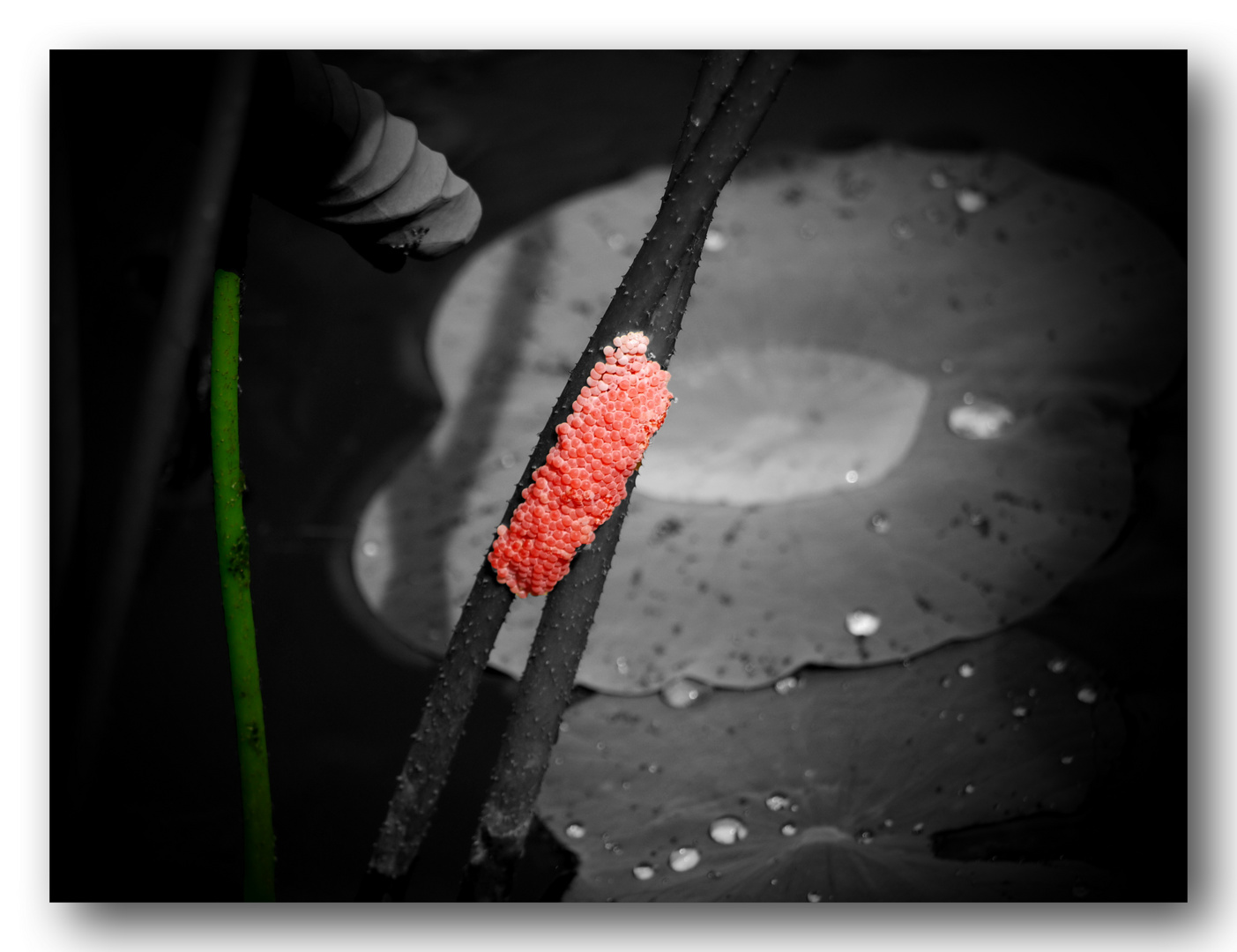 Perlen des Lebens - oder Rot-Grün-Verschiebung