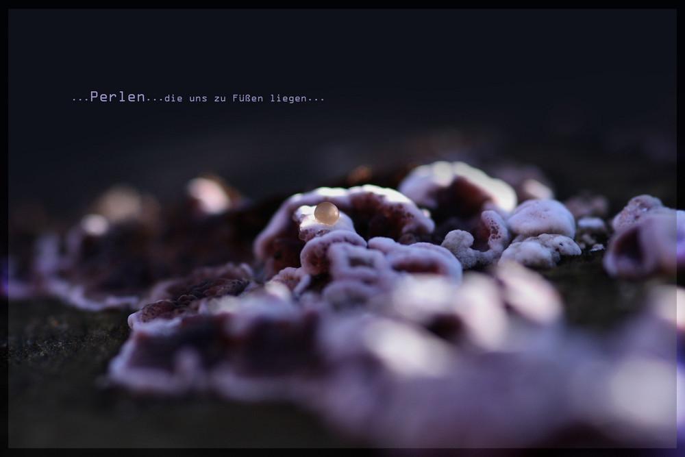 ~ Perlen ~