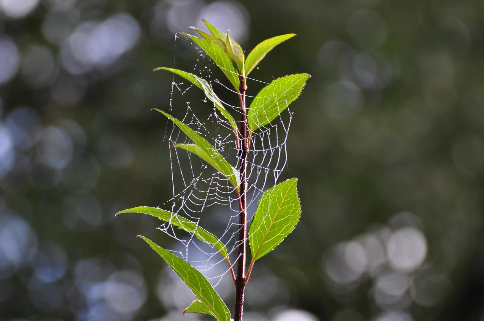 --- Perlen - Spinnennetz    ---