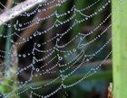 perlengewobenes Herbstkleid