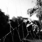 Perlenkette der Natur