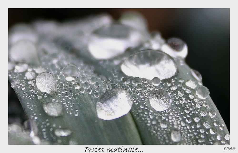 Perles matinale...