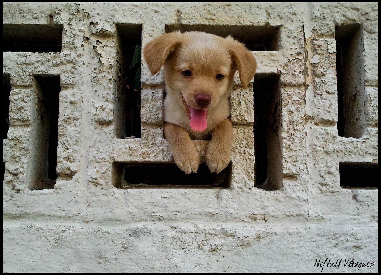 perrito asomado