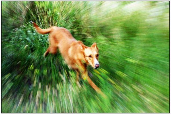 perro volando