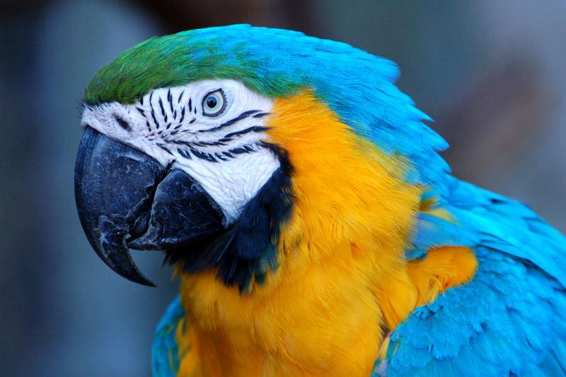 perroquet !!!