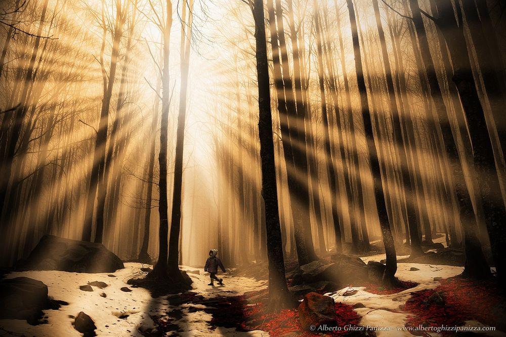 Risultati immagini per sole bosco