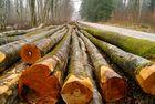 perspective de troncs, forêt d'orient, Aube