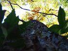 Perspektiven in der Natur