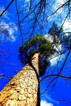 Perspektivischer Baum