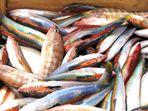Pesca a colori
