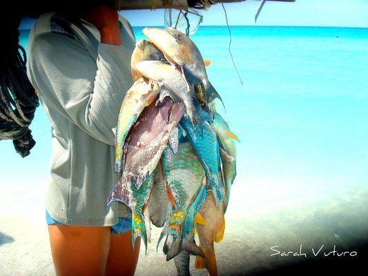 pesca a cuba