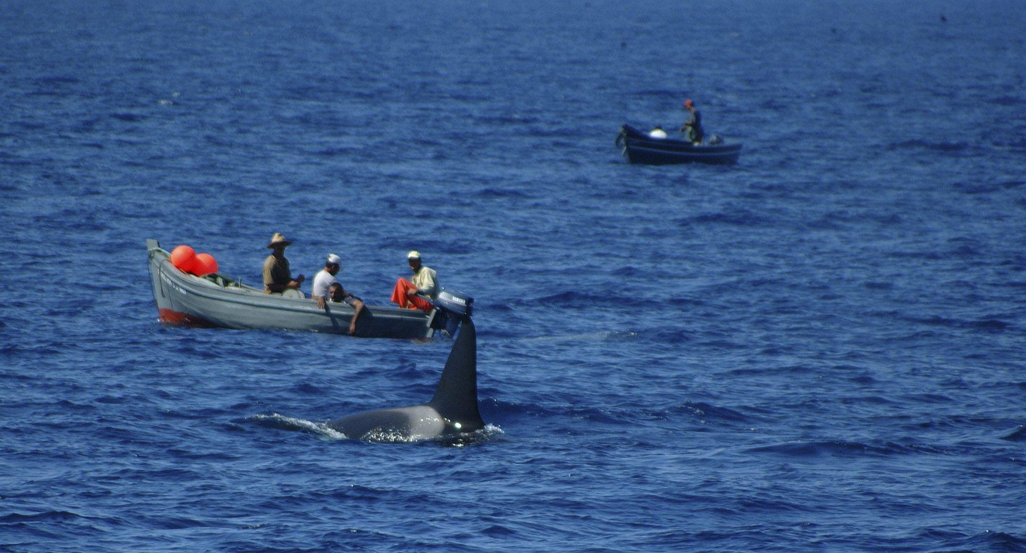 Pesca del atun en el estrecho